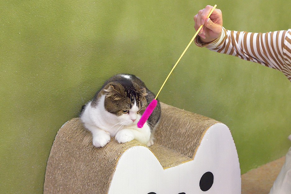 猫 可愛い写真の撮り方